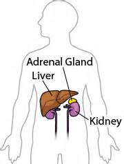 spleen causing weight gain and insomnia picture 3