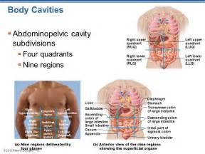 colon anatomy ppt picture 5