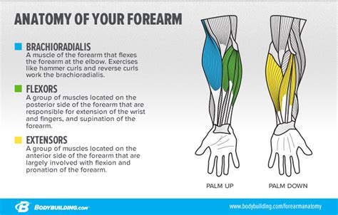 build forearm muscle picture 7