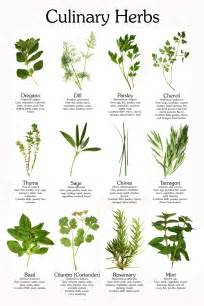 Glossary of herbs and their uses picture 5