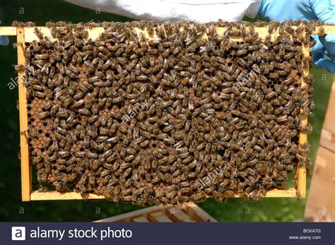 honey bee hives picture 10