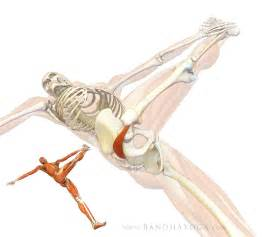 how long does it take for the piriformis picture 1
