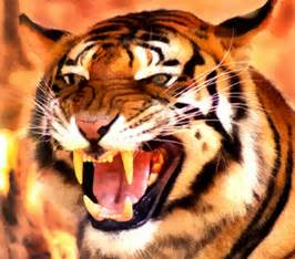 tiger teeth picture 5