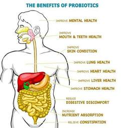 benefits of probiotics picture 2