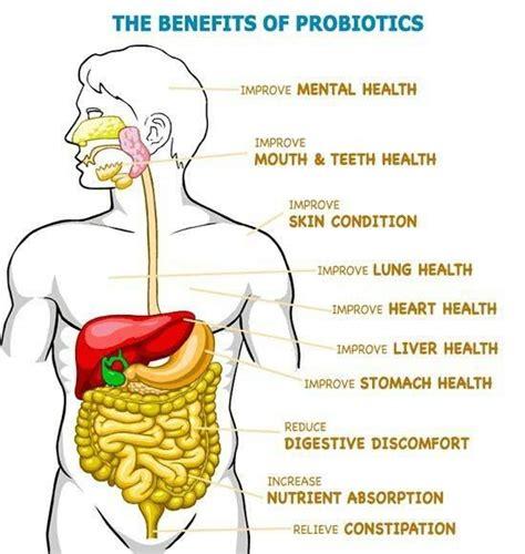 benefits of probiotics picture 5