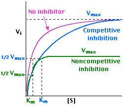 vmax on graph picture 2