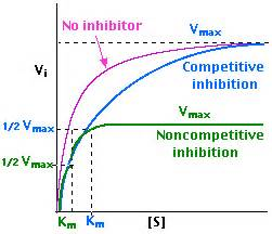 vmax enzyme kinetics picture 3