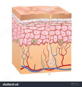 free images of human skin illustration picture 13