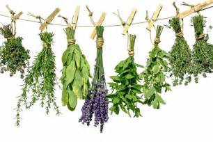 which herbal plants are best for picture 8