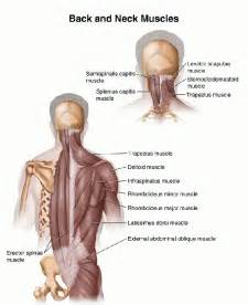 muscle spasms of the neck and shoulders picture 9