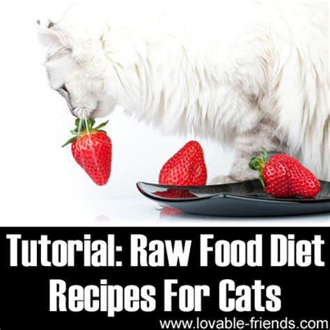 raw diet for cats picture 11