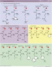 amino acids and looking younger picture 6