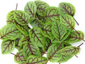 red sorrel herbal picture 7