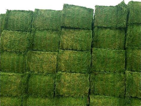 alfalfa bale prices picture 7