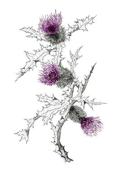 thistle tattoos picture 3