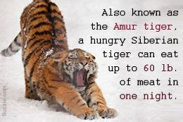 whats after h of the tiger picture 10