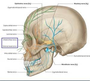 ciliary muscle and trigeminal pain picture 9