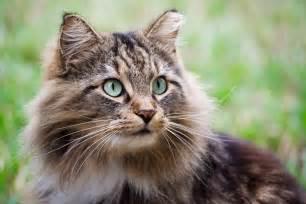 feline h picture 10