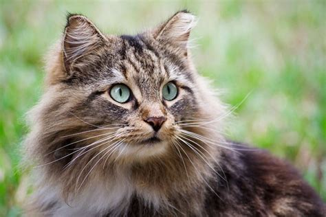 cats health picture 10