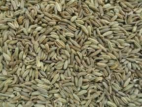 fennel seed picture 6