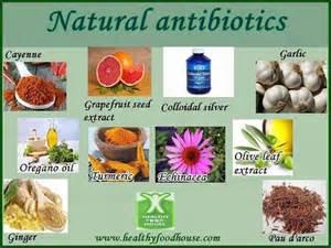 herbal antibiotics picture 1