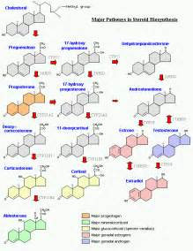 testosterone steroid chart picture 2