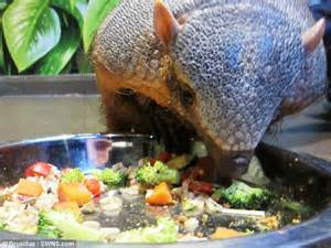 armadillo diet picture 3