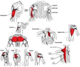 full body muscle building workouts picture 14