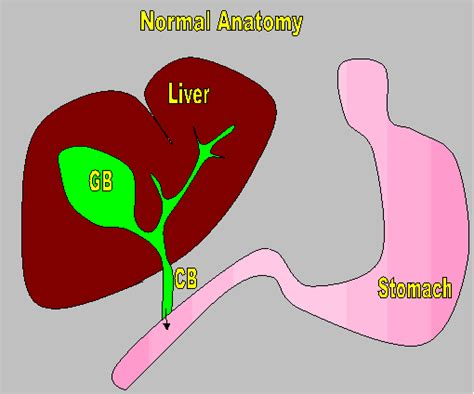 treat gall bladder disease picture 18