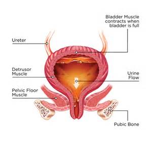 bladder in picture 2
