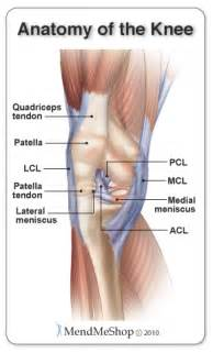 inner knee joint tendon injury picture 1