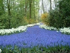deep purple falls over sleepy garden walls picture 2