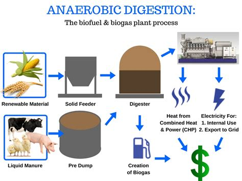 anaerobic digestion picture 10