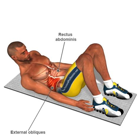 ab muscle exercise picture 3