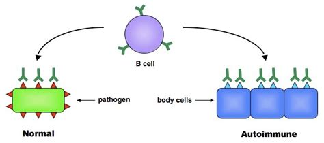 destruction of roots of h by immune system picture 2