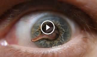 parasites picture 7