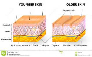 skin structure visuals picture 1