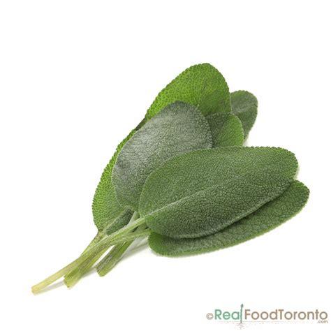 is diesel organic herbal salvia? picture 13