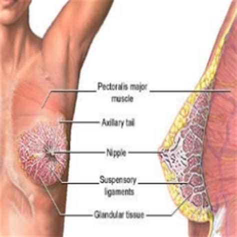 natural ways to dissolve a breast cyst picture 8