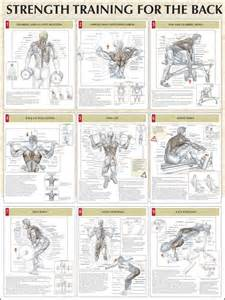definition of muscle strenght picture 7