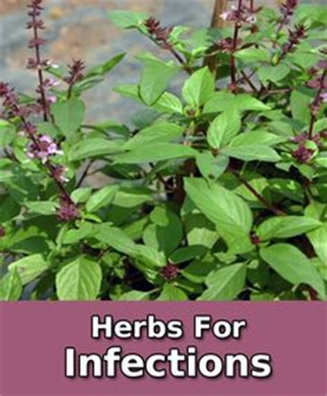 natural herbal plants remedy for singaw picture 5