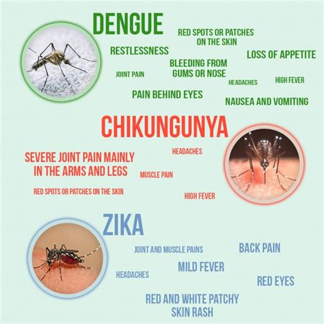chikungunya virus symptoms and signs picture 11