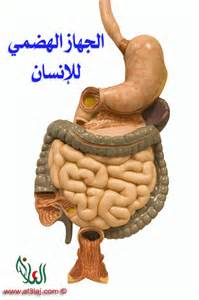 digestive system diseases picture 5