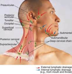 gland jaw joint pain picture 7