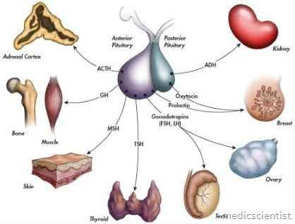 anterior pituitary hyperhormonotrophic syndrome symptoms picture 17