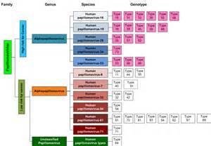human papilloma virus classification picture 1