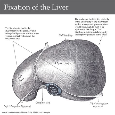 liver pain spasm picture 6
