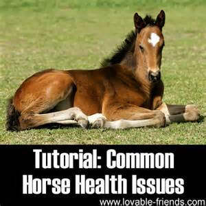 horse health issues picture 2