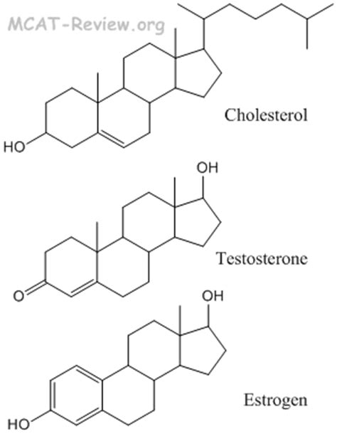 Cholesterol and testosterone picture 5