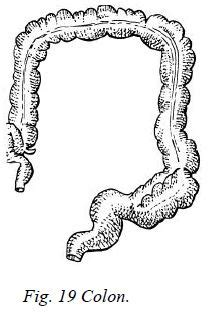 small intestine cause back pain picture 9